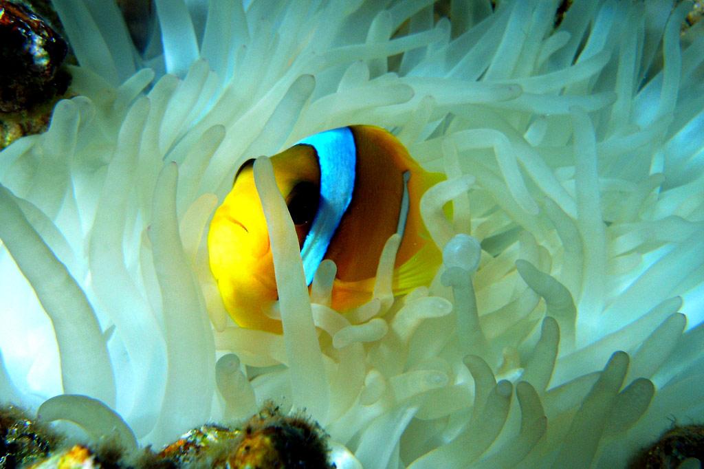 животные красного моря картинки людей вредители