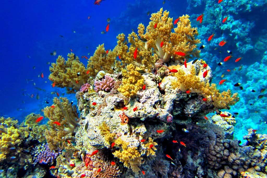 картинки красного моря египет вам
