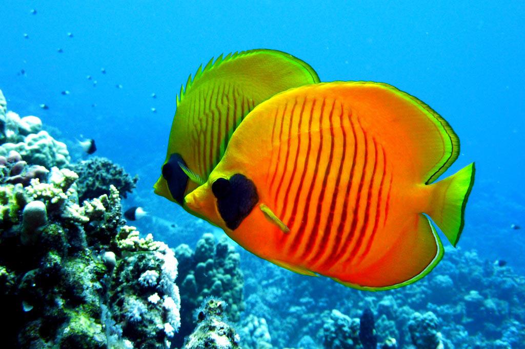 прекрасна, животные красного моря картинки примеру, прошлом месяце